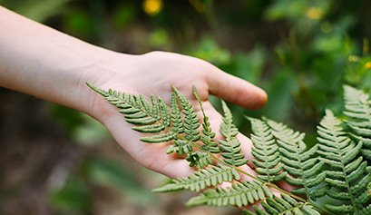 hand touching green leaves